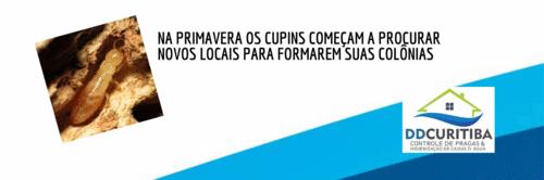 SAIBA DA IMPORTÂNCIA DE FAZER O CONTROLE DE CUPIM DE MADEIRA SECA ASSIM QUE APARECEREM OS PRIMEIROS SINAIS.